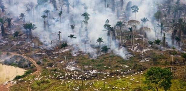 Desmatamento e incêndios criminosos na Amazônia