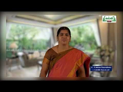 11th Food Management உணவின் அடிப்படைகள் அலகு 2 Kalvi TV