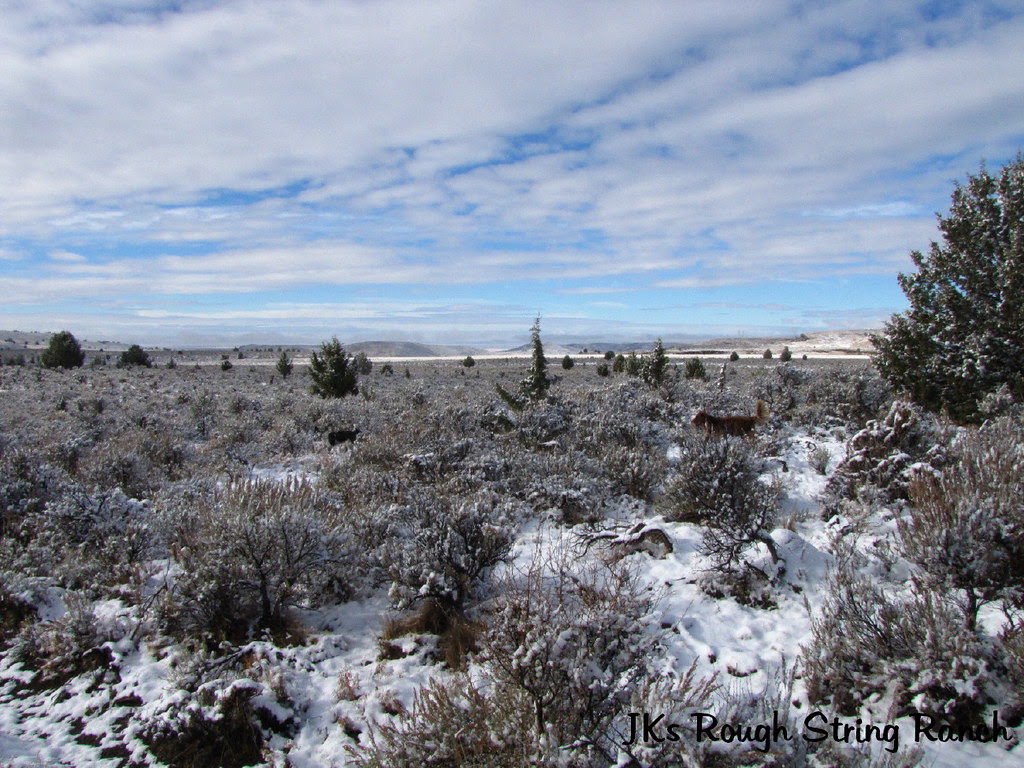 First Snow in the High Desert