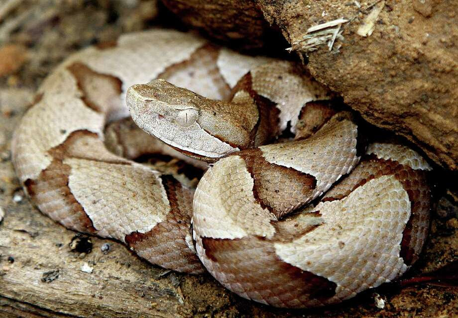 Outdoorsmen know to keep an eye out for copperheads when they're in the woods, but now the venomous snakes are gathering in groups on freshly mowed lawns. Here are some other things you probably weren't worried about, but really should be.  Photo: Picasa