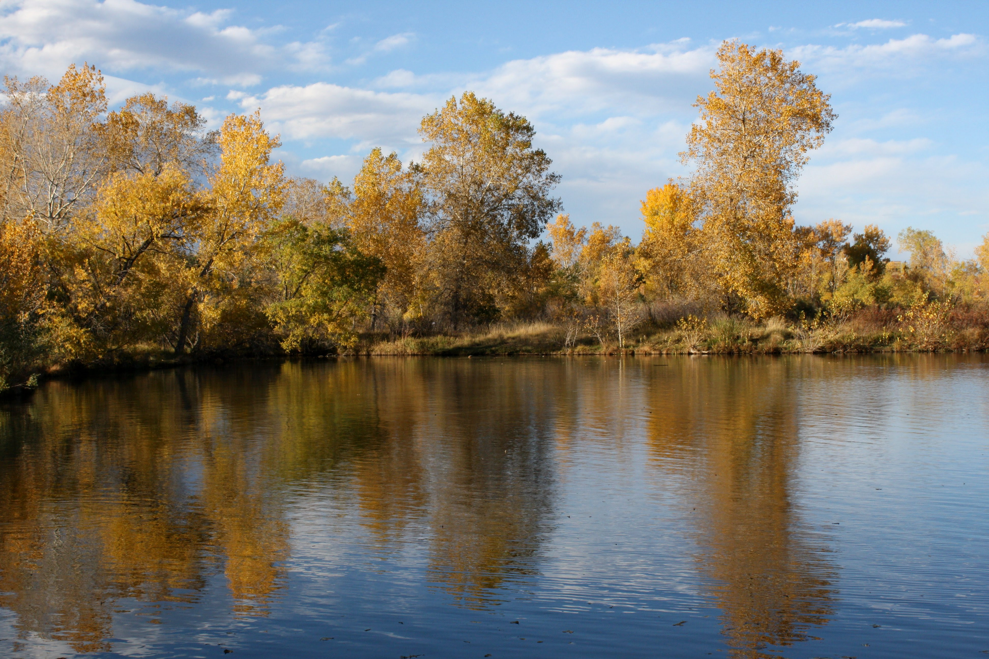 Golden Fall Trees Reflected In Lake Picture Free Photograph