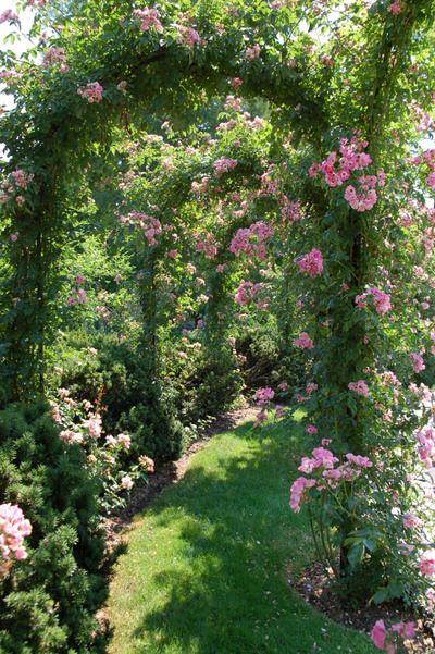 rose arbor walk