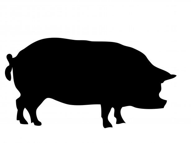 豚ブタの画像 原寸画像検索