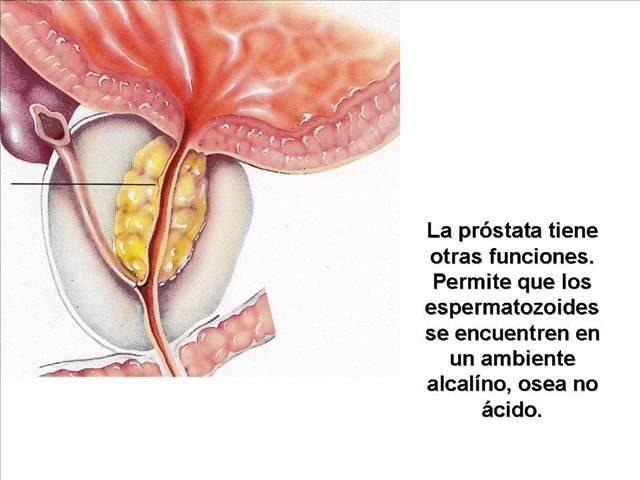 Puede Quedar Embarazada Con El Liquido Preseminal