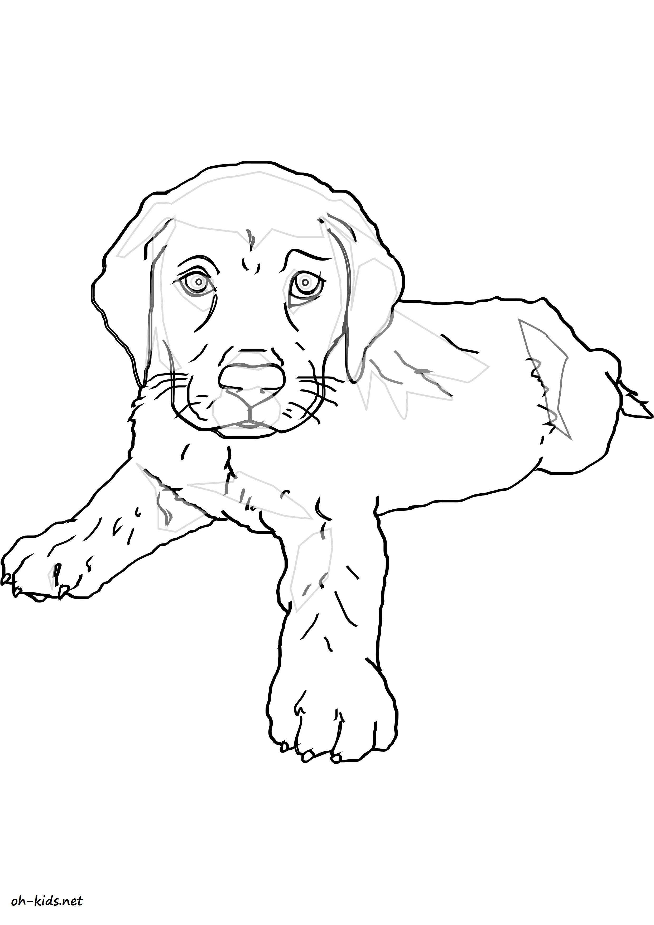 Coloriage Labrador Coloriage