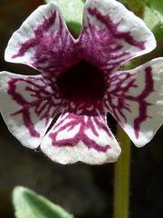 all hail the hypnoflower