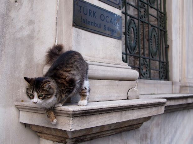 Cats in Istanbul: near the Grand Bazaar