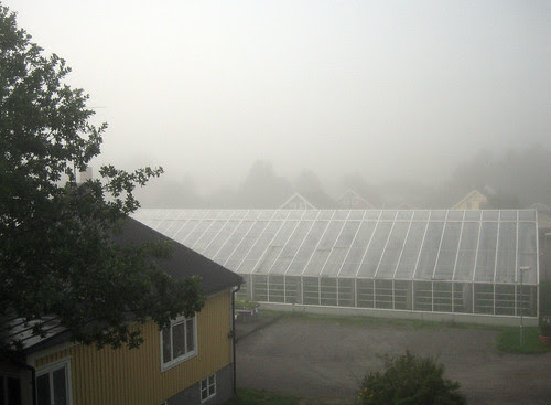 Misty Monday Morning