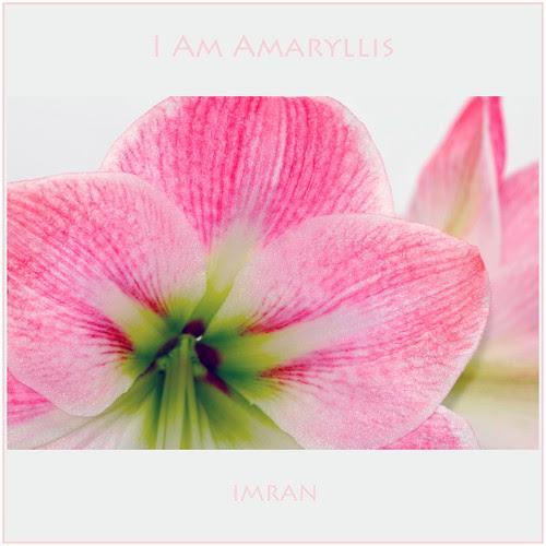I Am Amaryllis - IMRAN™ by ImranAnwar