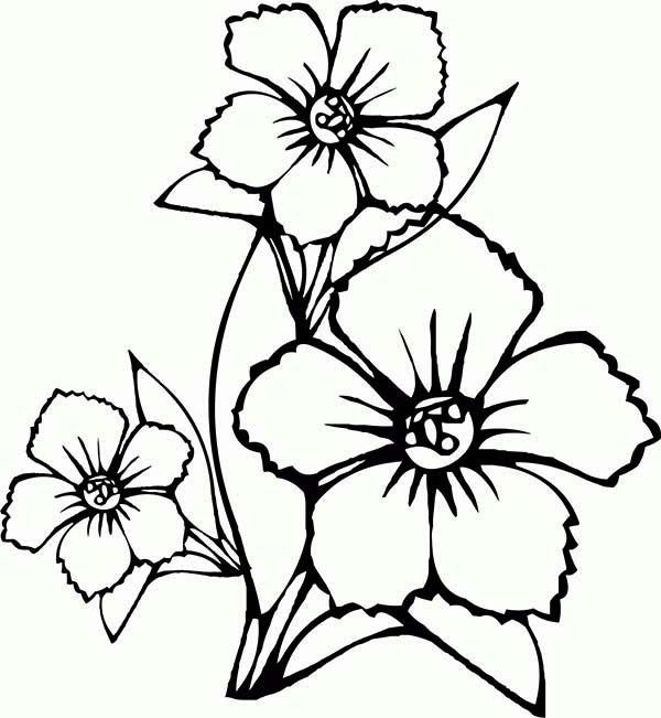 Art Pictures To Draw Flower