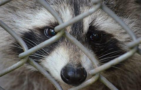 Risultati immagini per ferrara 8 ottobre stop sperimentazione animale