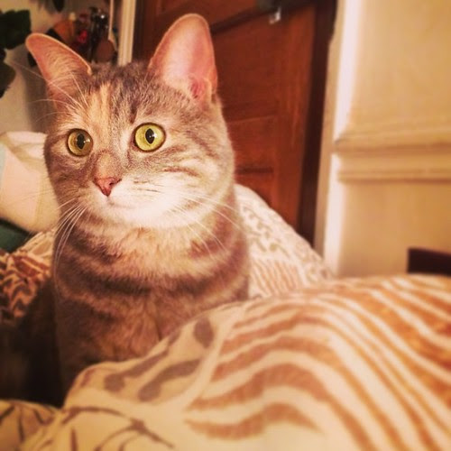Come avrete capito adoro questa gattina by la casa a pois
