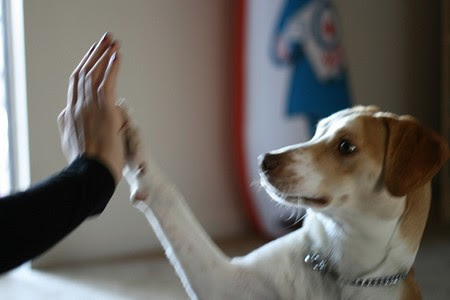 how to teach dog to shake head