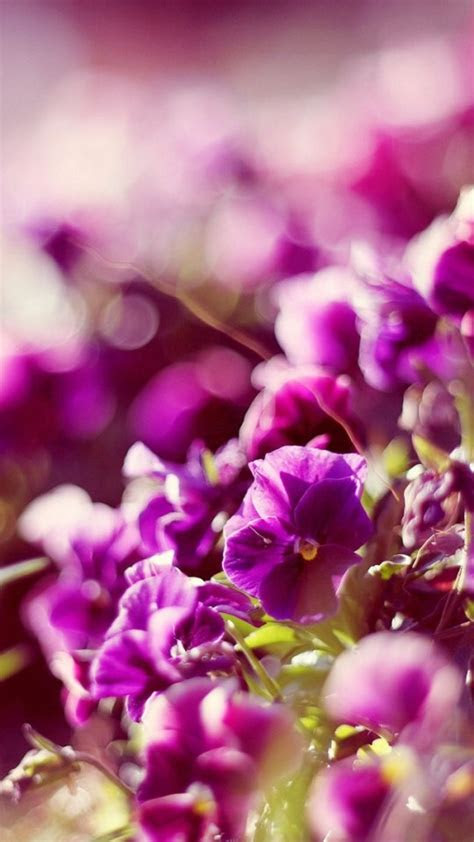 bokeh flowers wallpaper  iphone wallpapers