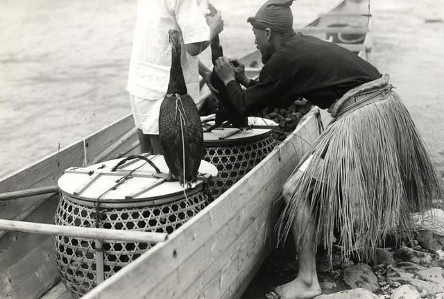 Vissers knopen touw om krop aalscholvers / Fishermen tying rope around goitre cormorants
