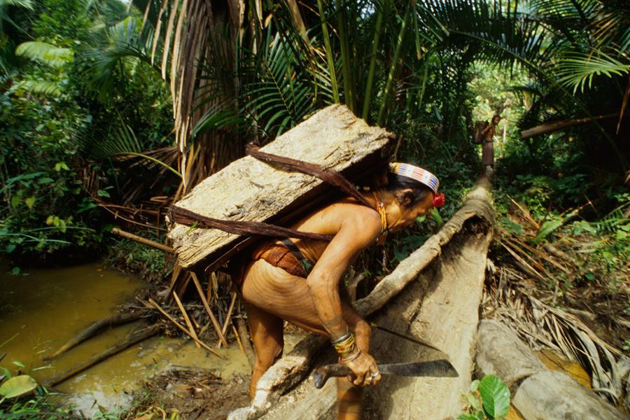 028 Mentwai tribesman carries sago