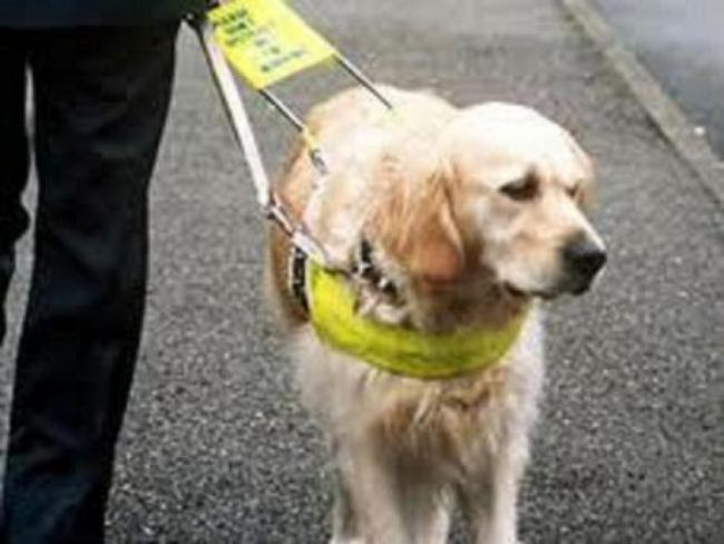 Guide Dogs Charity Logo
