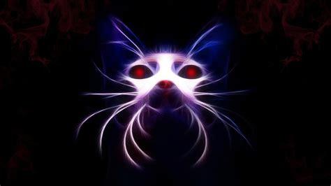 full hd wallpaper cat neon insubstantial muzzle desktop