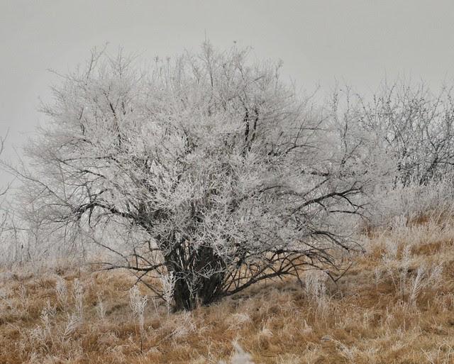 Winter Hoar