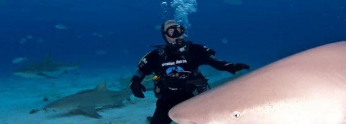 Οι καρχαρίες που κάνουν… Tweets
