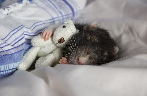 Tikus - Tikus Paling LUCU di Dunia