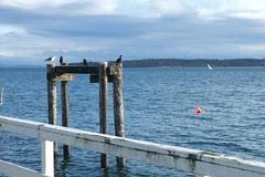 harbour birds
