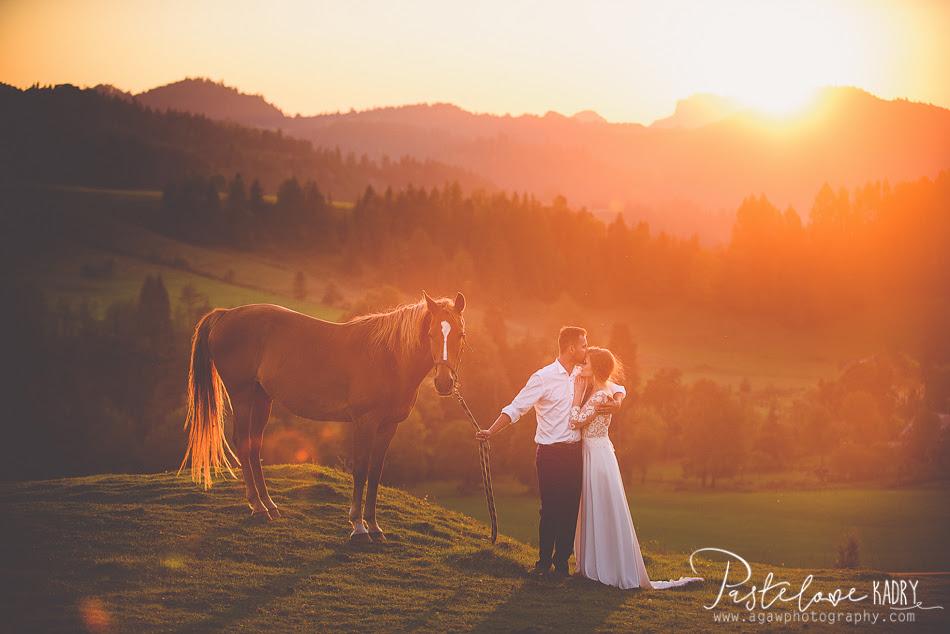sesja ślubna konie