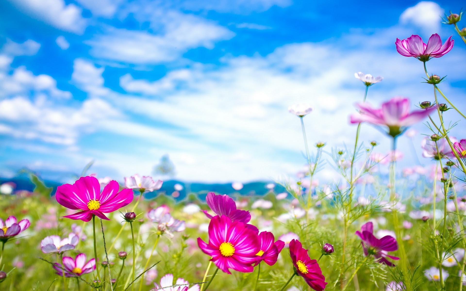 Flower Wallpaper Hd Widescreen