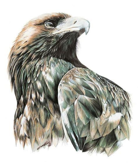 eagle drawing ideas  pinterest eagle sketch