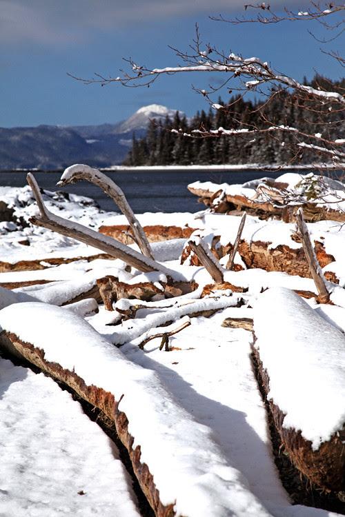 snow on beach logs, Kasaan, Alaska