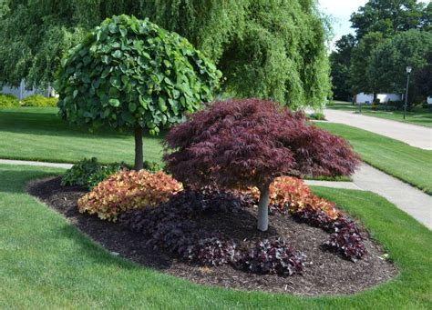 10 Cheap Landscaping Ideas   Budget Friendly Landscape Tips