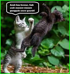 Meme Kucing Lucu Romantis