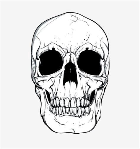 skull vector  vector site   vector art