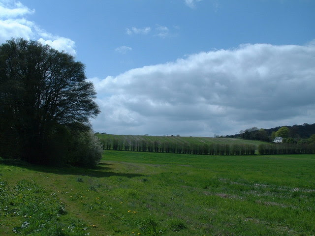 File:Noar hill near Selborne - geograph.org.uk - 163814.jpg