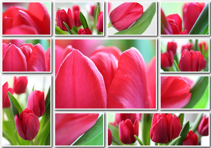 valentine tulips-000001