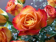 ValentineRoses_21611c