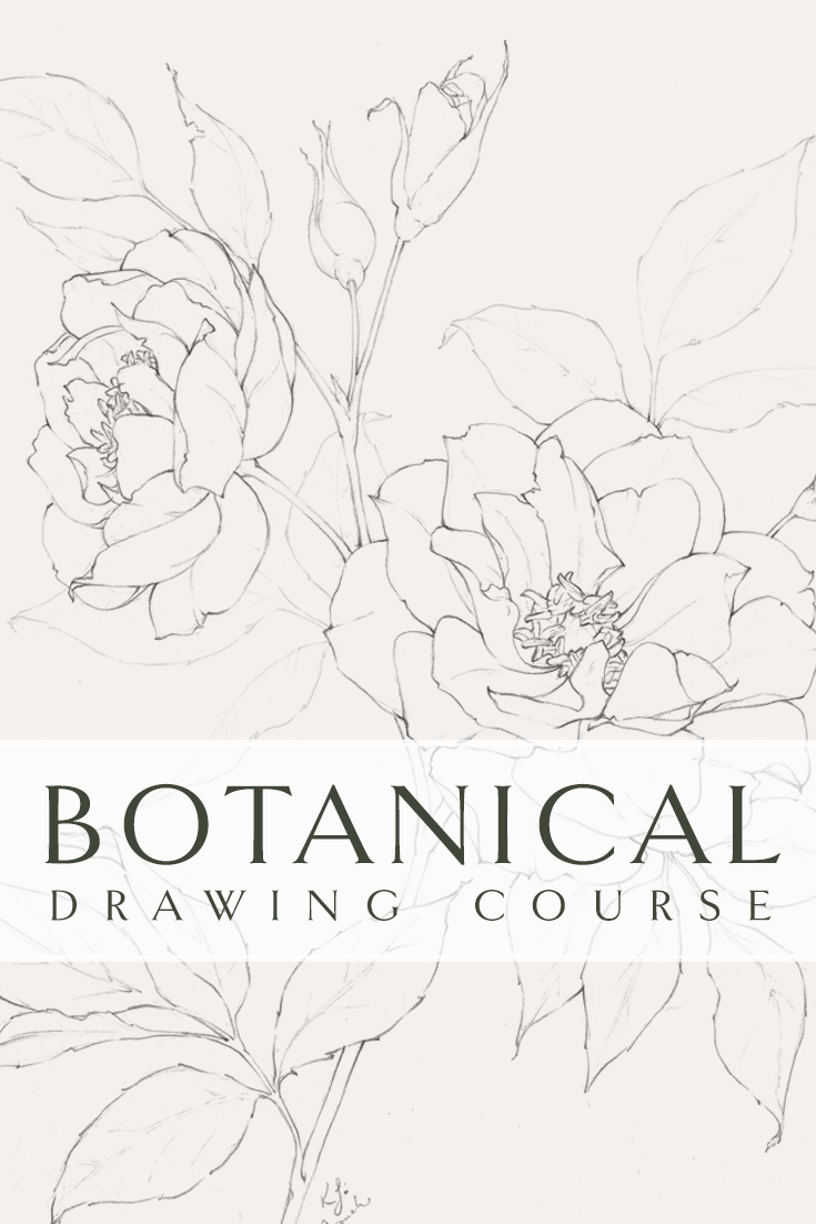 Flower Drawing Class Video Tutorial Series Blushed Design
