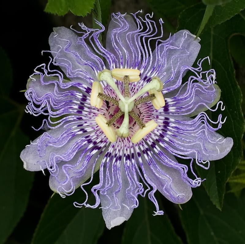 flores estranhas 1