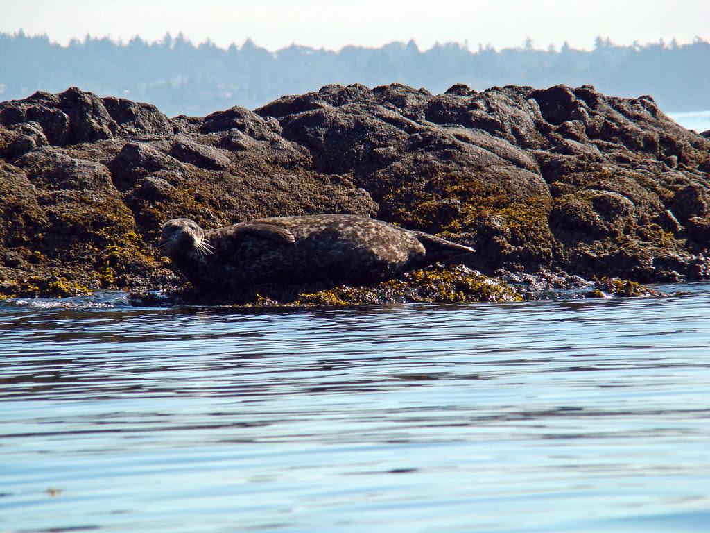 2010-07-18 - Albert Head-Witty's Lagoon 023