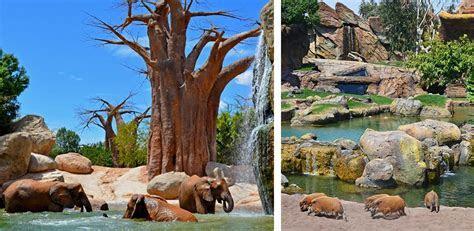 The Open Zoo   Bioparc Valencia