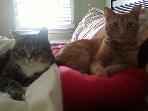 """These two say """"rise and shine!"""""""