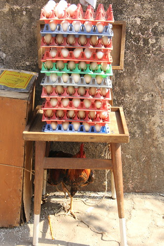 without  cocks there would have been no eggs .. hens were accidentally laid by firoze shakir photographerno1
