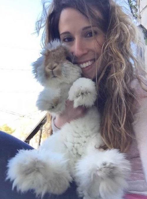 Un curioso conejo con las orejas más esponjosas se vuelve toda una celebridad en las redes