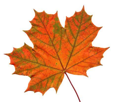 leaf transparent hq png image freepngimg