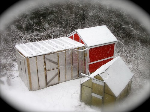 The coop in winter. Checkout the video link below.