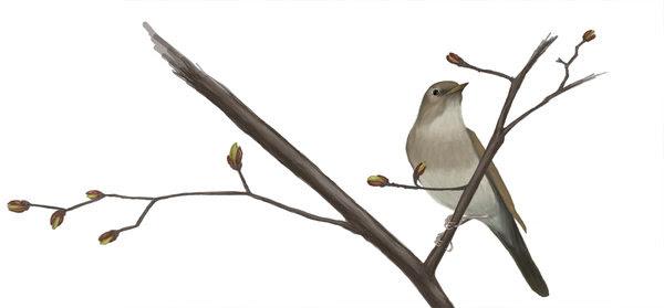 http://www.netschoolbook.gr/eleni/helen/Nightingale_by_Noradyn.jpg