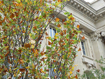 le grand palais en automne.jpg