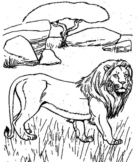 desert animals coloring pages coloringpagesabccom