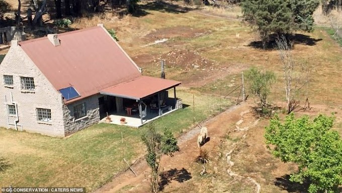 ₦38,000 Per Night Guest House With 77 Lions In South Africa (Photos)