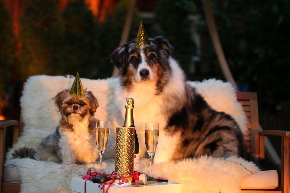 Frases De Ano Nuevo Cortas Para Felicitar A Tu Amor Amigos Familia